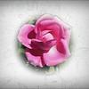 2016-03-22_P3222340_Mary Rose ,Largo,Fl