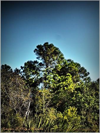 2014-12-06_PC060036_Enterprise DP,Clearwater,Fl