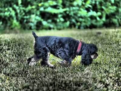 2019-01-19_40x150,art10,p_neighbor's dog_P1190003