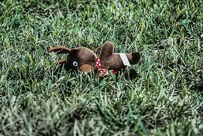 2019-01-31_40x150 art10  neighbor's dog toys_P1310001