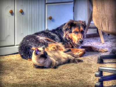 2017-06-05_P6050001_bear and paws,clwtr_Remember When