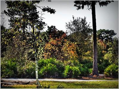 2014-12-06_PC060037_Enterprise DP,Clearwater,Fl