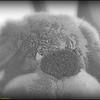 2017-04-26_P4260003_Stuffed dog,Clwtr,Fl