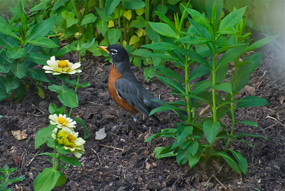 bird viewing, mulch