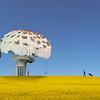Fungi Houses