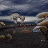 Journey Through the Fungi