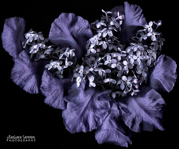 Vision in Blue - Iris petals and lilacs