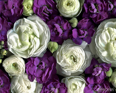 Catalog #3003 - Petals - Ranunculus and Stocks