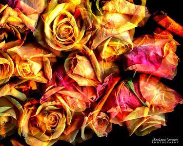 Catalog #3007 - Roses Galore - Orange Roses