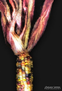 Dried Corn - Processed with a Watercolor Plug-in