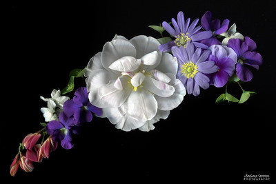 Mixed Arrangement - Tulip, anemone, violets and sweet pea shrub