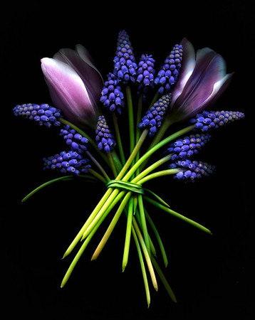 """""""Shades of Spring Purple"""" Tulips and grape muscari"""