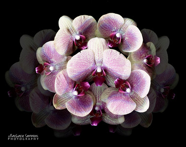 In The Shadows - Orchids
