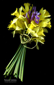 """Ah, Spring"" Daffodils and Iris"