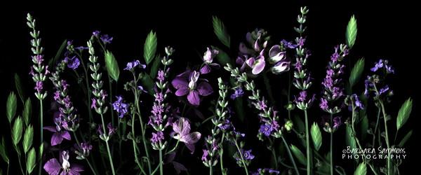 Summer Garden Flowers - Lavender, larkspur, forget-me-nots and sea oats
