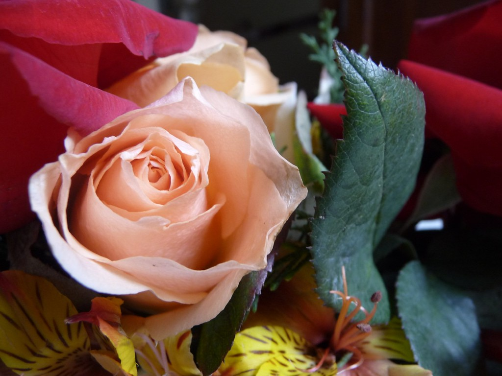 Roses and stuff 8