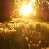 Summer Morning Illumination