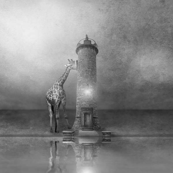 Nosy Giraffe
