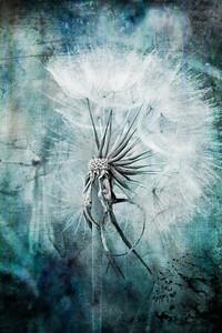 Dandelion blue