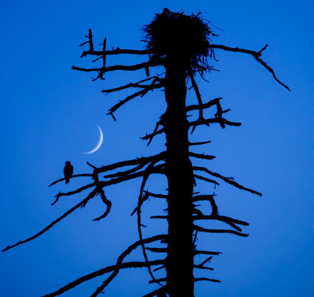 Eagle's nest near Gold Beach, OR.