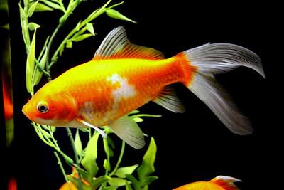 Aquatic Orange