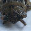 Cicada Face