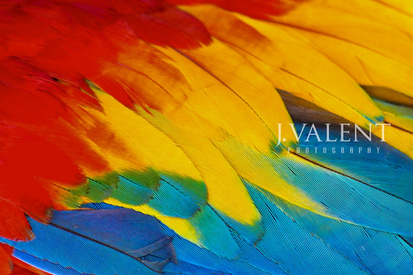 Parrot Feathers, Natural Rainbow