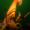 Crabs get the prize for best threat gesture.