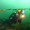 Jan watching two kelp crabs weave a bull kelp rope.