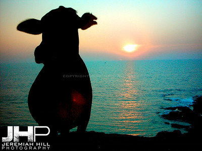 """A Cow At Sunset"", Anjuna Beach, Goa, India, 2004 Print INDIA4-57V2"