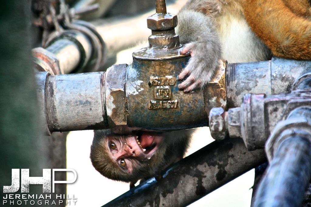 """Thirst Quencher"", Rishikesh, Uttaranchal, India, 2007 Print IND3714-282"