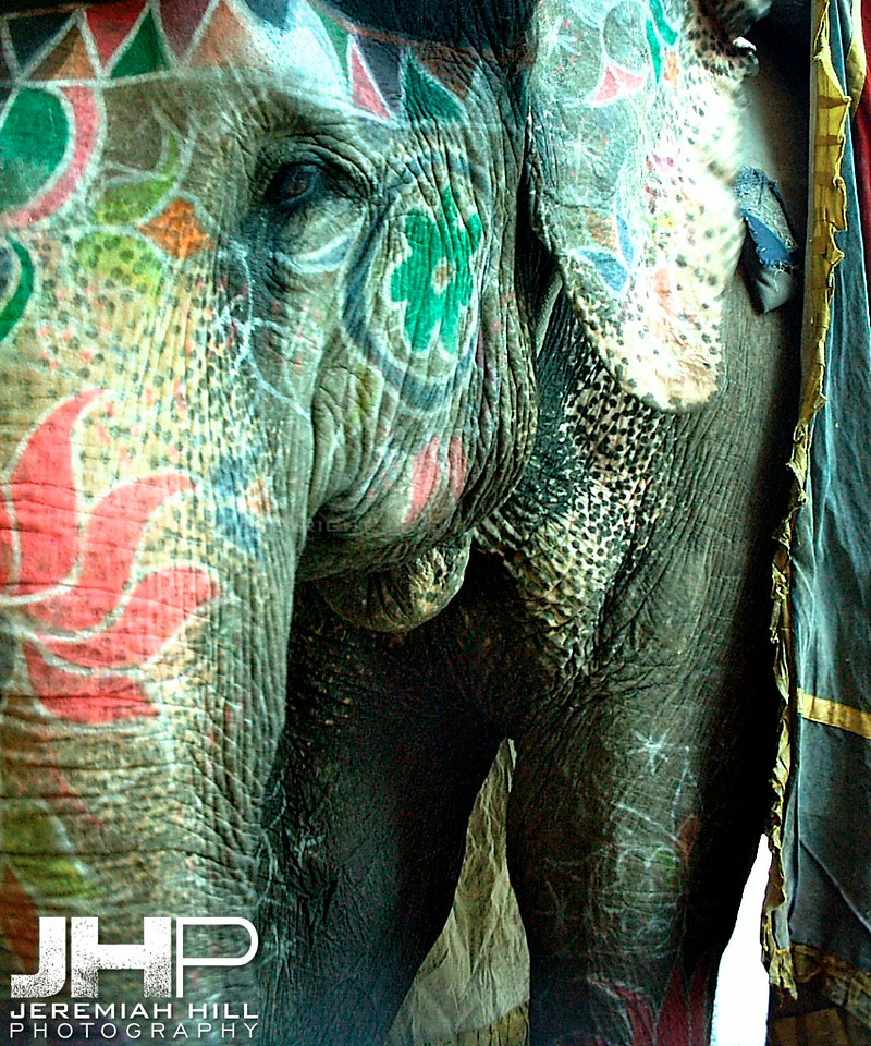 """Painted Elephant #2"", Amber Fort, Jaipur, Rajasthan, India, 2005 Print INDIA9-154"