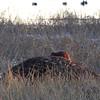 Beaver<br /> Heron Pond <br /> Riverlands Migratory Bird Sanctuary