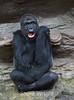 Gorillas - SF Zoo #5479