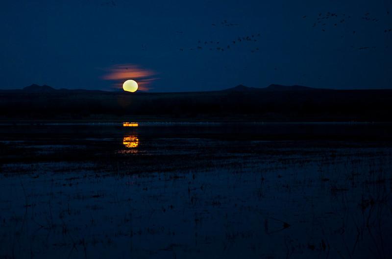 Full moon rising and birds in flight.