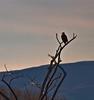 More than an hour later and this Bald Eagle still waits---perhaps for another visitor.<br /> <br /> I hope you enjoyed this visit to the Bosque del Apache National Wildlife Refuge.