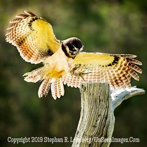 On Target Copyright 2018 Steve Leimberg UnSeenImages Com _A6I8510