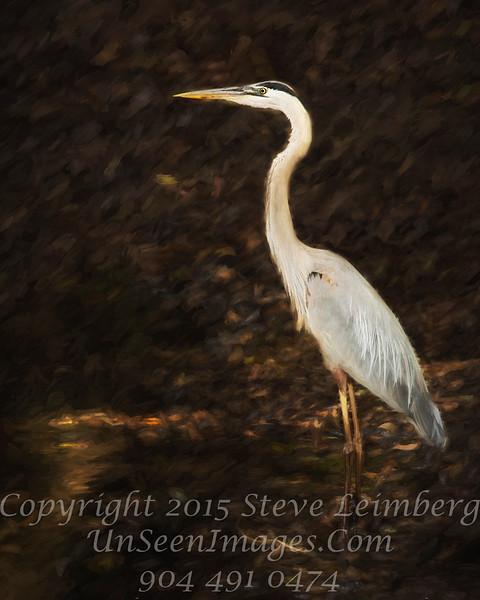 Heron - PAINTING - Copyright 2016 Steve Leimberg - UnSeenImages Com _Z2A4701