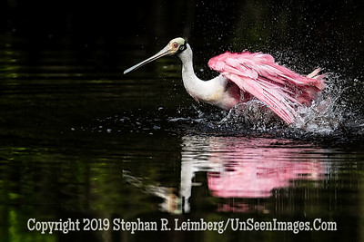 Dancing as Fast as I Can  Copyright 2019 Steve Leimberg UnSeenImages Com _A6I2357