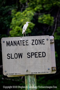 Manatee Zone Copyright 2019 Steve Leimberg UnSeenImages Com _A6I0143
