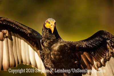 See My Wings - Copyright 2018 Steve Leimberg UnSeenImages Com _Z2A1562