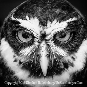 You are In My Power - B&W Copyright 2018 Steve Leimberg UnSeenImages Com _A6I8553