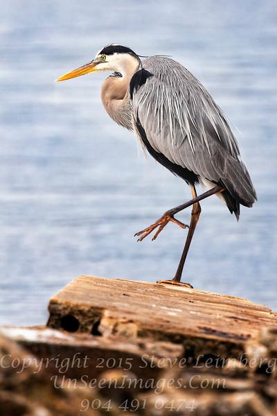 Heron Copyright 2018 Steve Leimberg UnSeenImages Com _Z2A5196