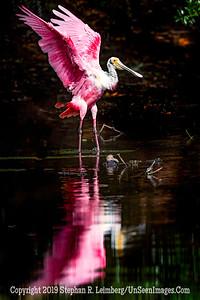 Wings High Copyright 2019 Steve Leimberg UnSeenImages Com _A6I2104