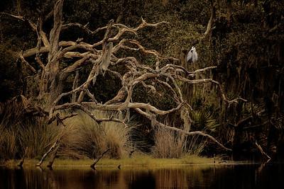 Heron in Tree II - Copyright 2020 Steve Leimberg - UnSeenImages Com File3100