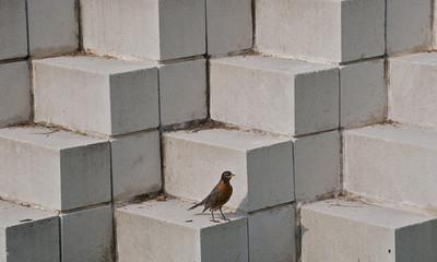 Square robin