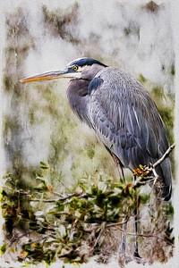Heron On a Branch Copyright 2020 Steve Leimberg UnSeenImages Com