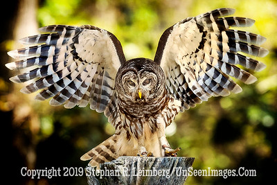 On the Wing - Copyright 2018 Steve Leimberg UnSeenImages Com _A6I8977