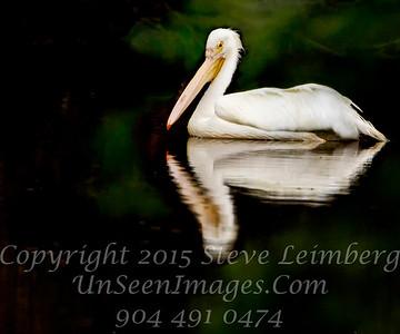 White Pelican 2 Copyright 2018 Steve Leimberg UnSeenImages Com _L8I5436