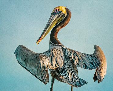 Pelican at Mayport PAINTING Copyright 2021 Steve Leimberg UnSeenImages Com _DSC0217 copy